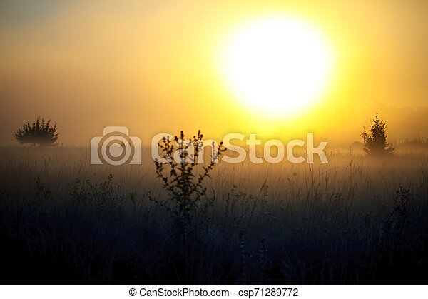 Fog landscape over a flower meadow, the first rays of dawn and dark silhouettes of trees against a sunrise, selective focus - csp71289772