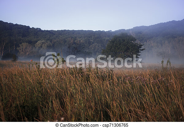 Fog landscape over a flower meadow, the first rays of dawn and dark silhouettes of trees against a sunrise, selective focus - csp71306765