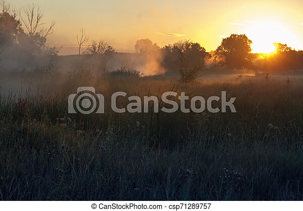 Fog landscape over a flower meadow, the first rays of dawn and dark silhouettes of trees against a sunrise, selective focus - csp71289757