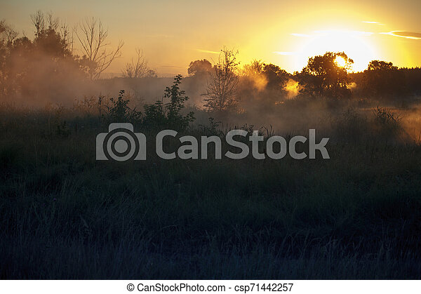 Fog landscape over a flower meadow, the first rays of dawn and dark silhouettes of trees against a sunrise, selective focus - csp71442257