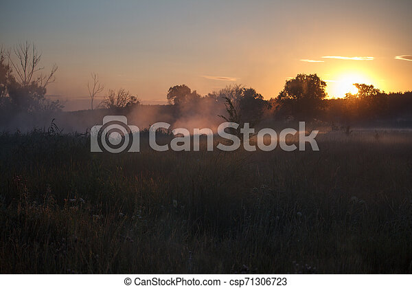 Fog landscape over a flower meadow, the first rays of dawn and dark silhouettes of trees against a sunrise, selective focus - csp71306723