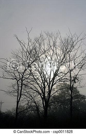 Fog, sun & tree - csp0011828