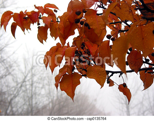 Foggy fall - csp0135764