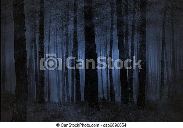 Foggy forest - csp6896654