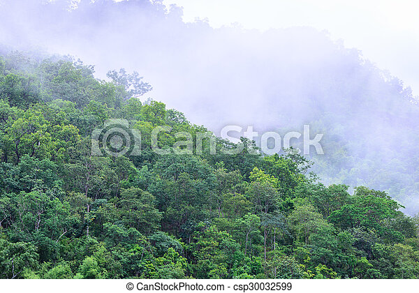 Foggy in forest on morning. - csp30032599