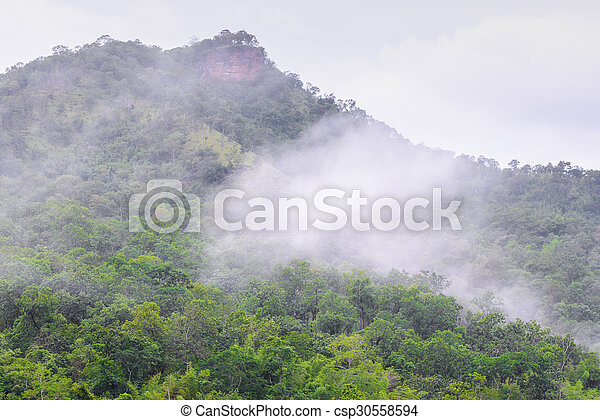 Foggy in forest on morning. - csp30558594