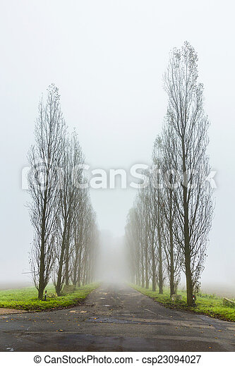 foggy landscape with tree alley - csp23094027