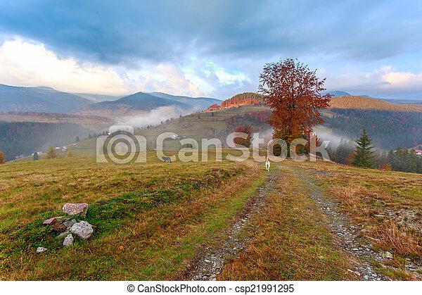 Foggy morning in Transylvania - csp21991295