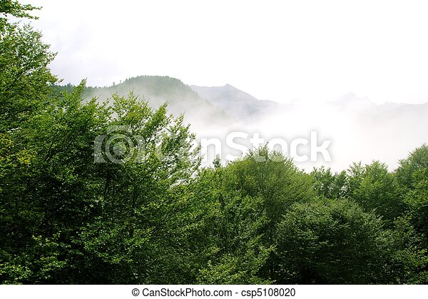 foggy mountains forest fog scenics nature - csp5108020