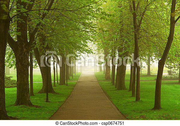 Foggy park - csp0674751