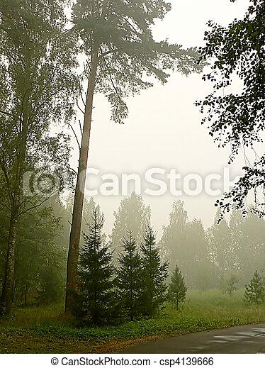 Foggy Park - csp4139666