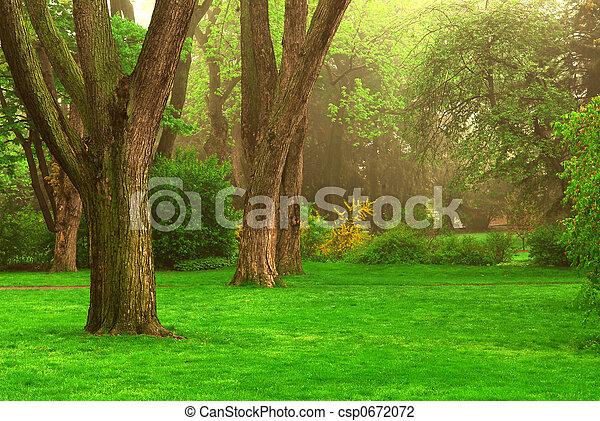 Foggy park - csp0672072
