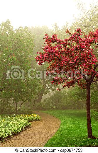 Foggy park - csp0674753