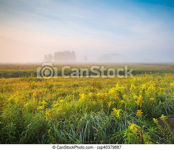Foggy spring morning - csp40379887