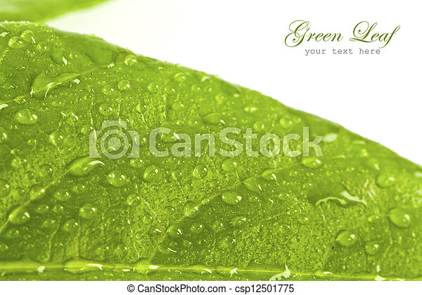 foglia, acqua, sfondo verde, bianco, gocce - csp12501775