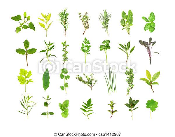 foglia, grande, erba, selezione - csp1412987