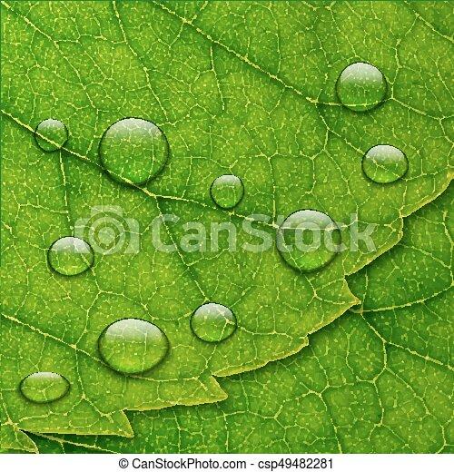 Foglia Macro Acqua Vettore Sfondo Verde Gocce Foglia Eco