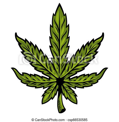 foglia, marijuana - csp66530585