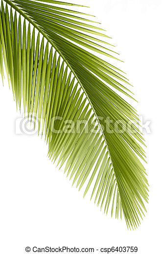 foglia palma - csp6403759