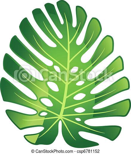 foglia tropicale, pianta, -, monstera. - csp6781152