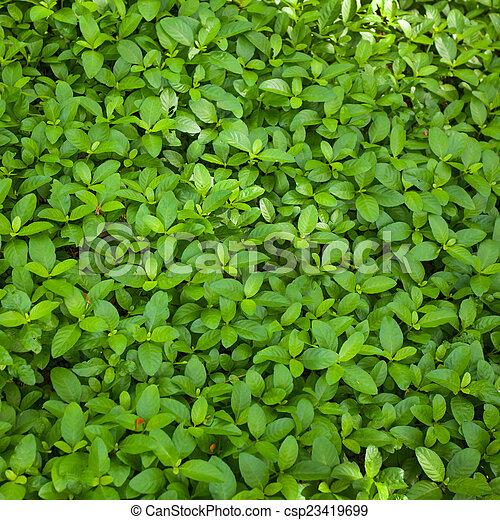 foglia verde, fondo - csp23419699