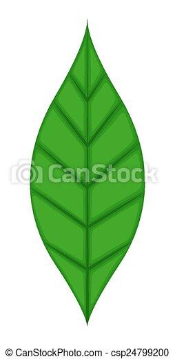 foglia verde - csp24799200