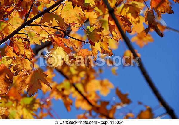 foglie, acero, cadere - csp0415034