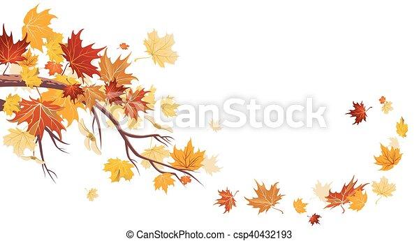 foglie, acero - csp40432193