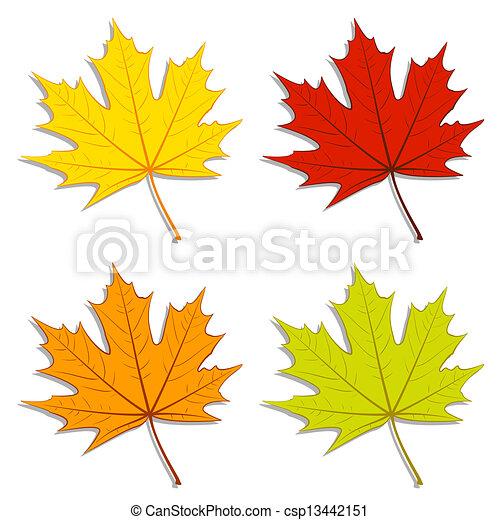 foglie, acero - csp13442151