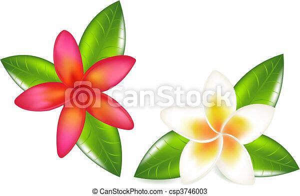 foglie, fragipani - csp3746003
