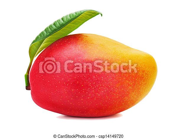 foglie, isolato, mango, fondo., frutta, verde, fresco, bianco - csp14149720