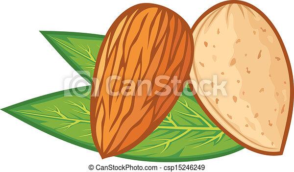 foglie, mandorla, (almond, nut) - csp15246249