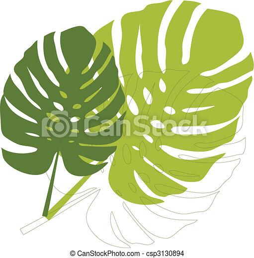 foglie, philodendron - csp3130894