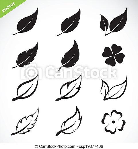 foglie, vettore, set, icona - csp19377406