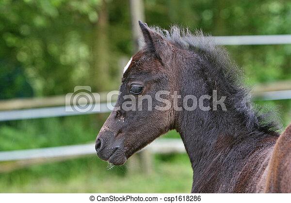 Foal - csp1618286