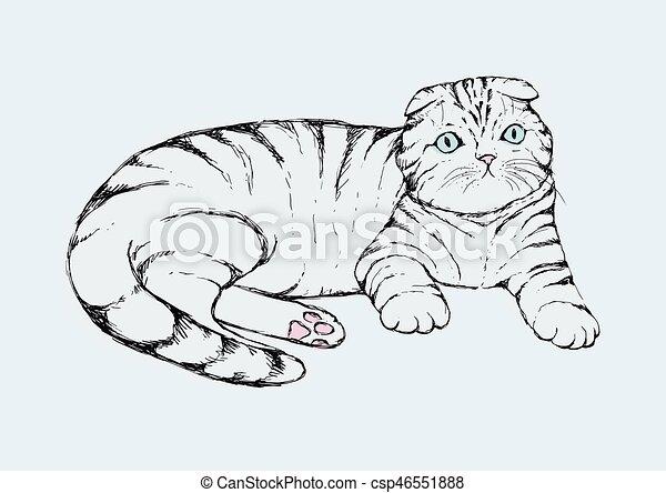 Fold cat - hand drawn vector illustration. Flap-eared tabby kitten is lying. Realistic portrait housecat. - csp46551888