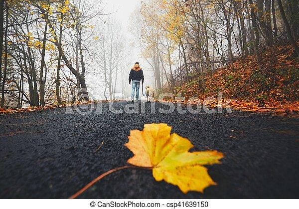 folha caída, estrada - csp41639150