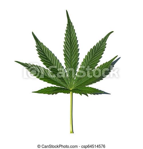folha, marijuana - csp64514576