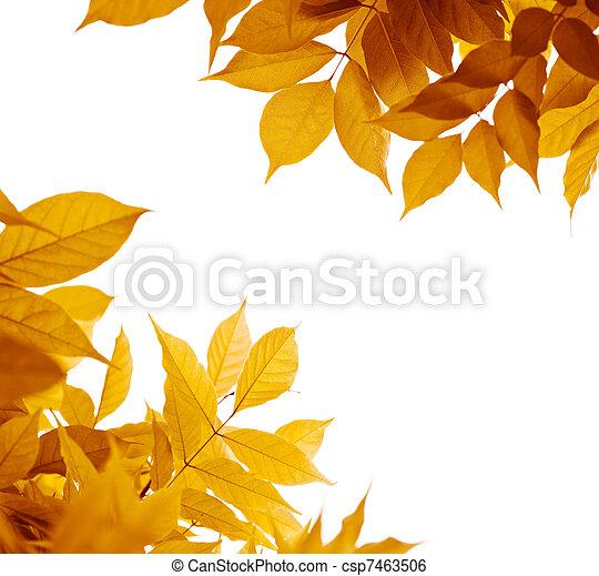 folha marrom, laranja, folhas, outono, experiência., cores, amarela, branca, borda, sobre - csp7463506