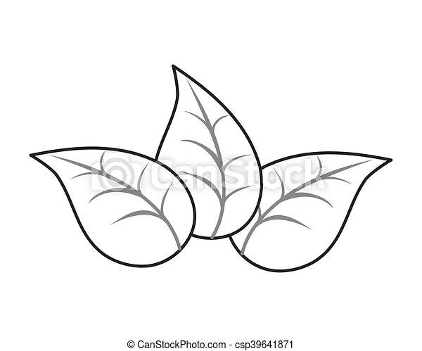 Folha Planta Desenho Natureza Botanica Planta Natural