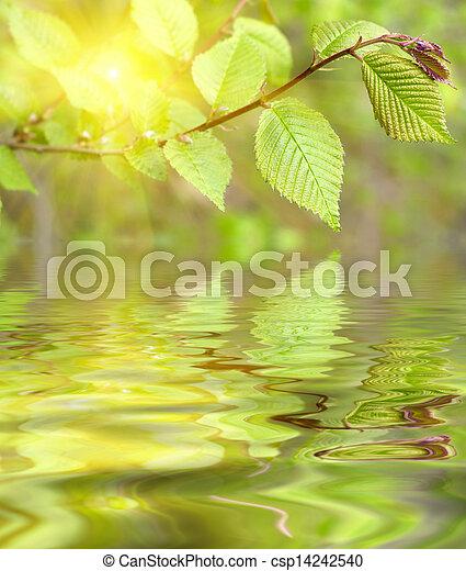 folhas - csp14242540