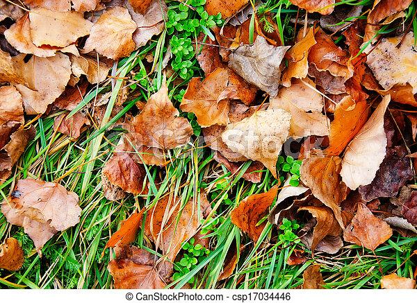 folhas - csp17034446
