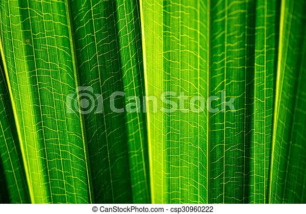 folhas - csp30960222