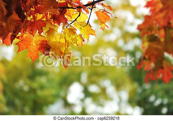 folhas, bonito, outono, coloridos, parque - csp6239218