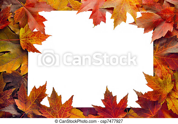 folhas, borda, maple, outono - csp7477927