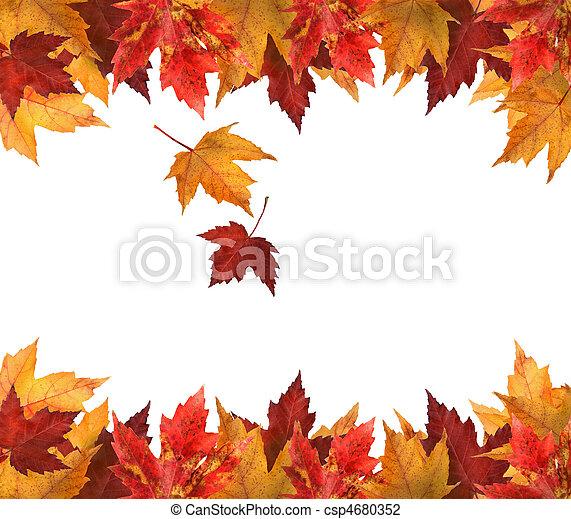 folhas, branca, maple, isolado - csp4680352