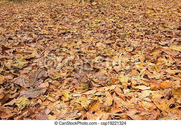 folhas, caído - csp19221324