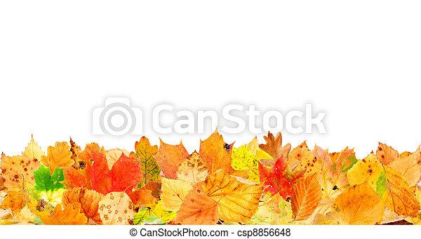 folhas, caído - csp8856648