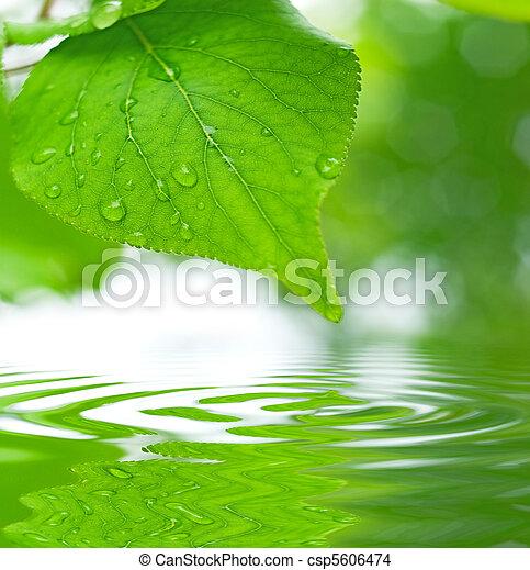 folhas, foco raso, refletir, água verde - csp5606474
