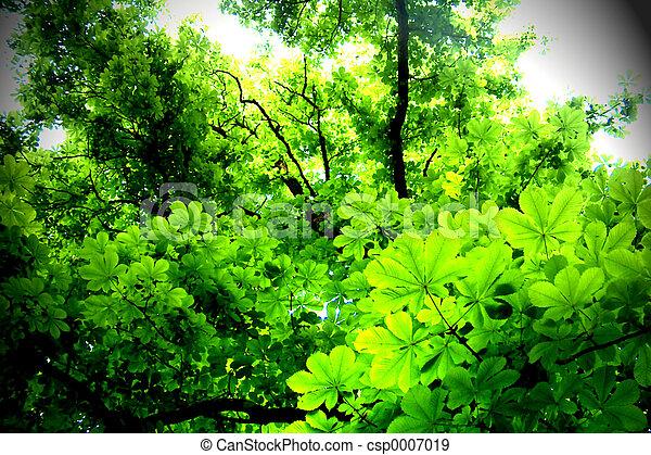 folhas - csp0007019